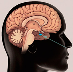 hipofisis-pituitaria